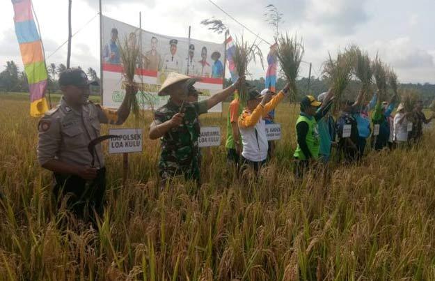 Tak Tersentuh Tambang, Lahan Persawahan Desa Sumber Sari Dinilai Cukup Potensial