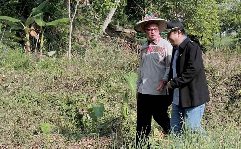 Samarinda Berhasil Kembangkan Bawang Merah